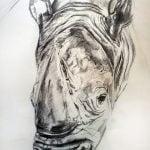 A pencil drawing of a rhino's head