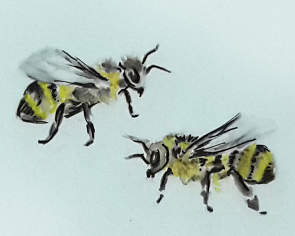 A watercolor and pen drawing of two bees by artsydee