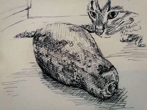 Drawing of a cat and a pawpaw in pen