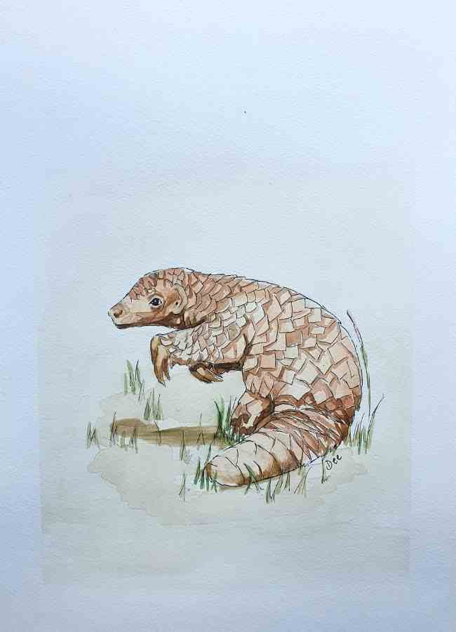 Painting of a Pangolin in watercolor and pen by Dee Maene