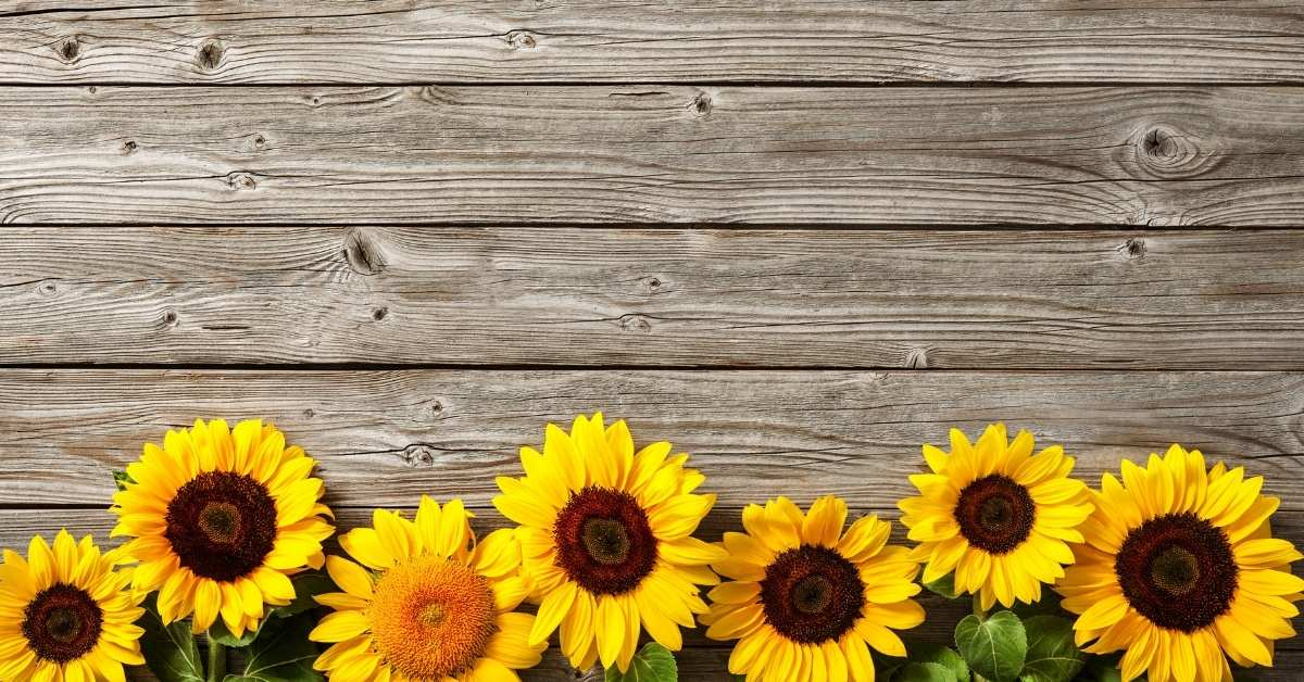 6 Free Sunflower Printables: Gorgeous Templates for your Next Artwork!