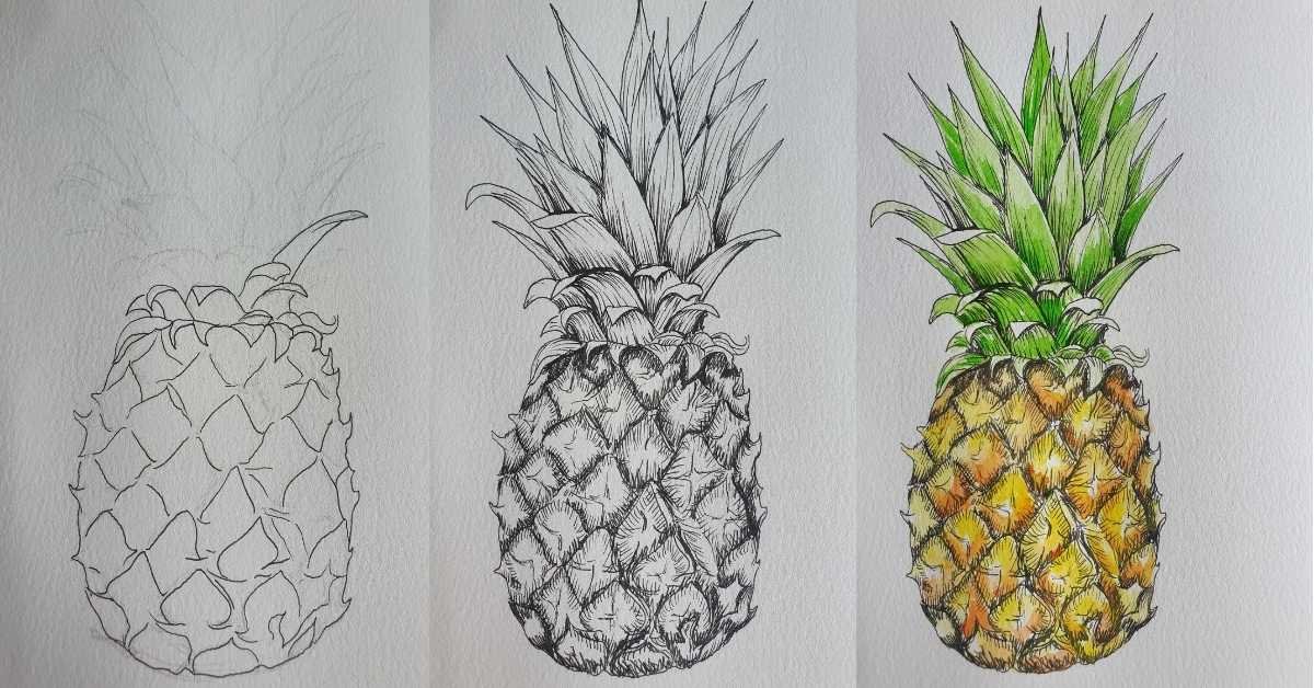 Three pineapples demonstrating how to draw a pineapple